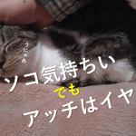 猫を撫でる時の注意点と触り方!猫ぱんちや甘噛みされることも?