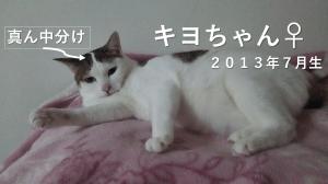 キヨちゃんの動画