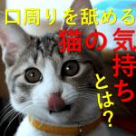 猫が口の周りをペロペロ舐める時の気持ちは?何を考えている?お腹が空いているの?