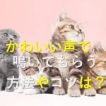 猫のかわいい鳴き声を聞くには?鳴いてもらう方法やコツは?どろ猫日記第12回目