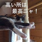 猫にキャットタワーは必要なの?無くても運動できるのでは?