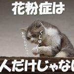 猫の花粉症の原因と対策や治療費は?そのくしゃみはカゼなの?