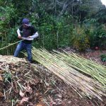 Thin bamboo for eco construction of our bathroom