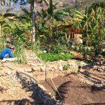 Casa Jardin between the banana trees