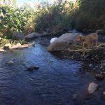 River coming through the Doron Yoga & Zen Center grounds