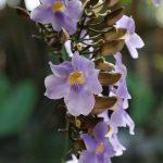 Beautiful flower from Doron Yoga & Zen Centera gardens no. 1