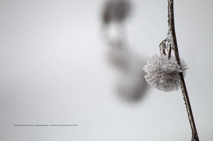 winter 2016 pg 017