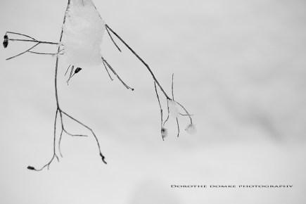 winter 2016 pg 021