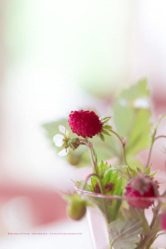 Erdbeerzeit pg 001