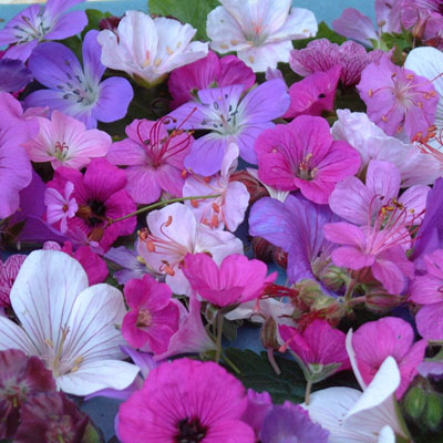 Geranium-flower-mix-#4