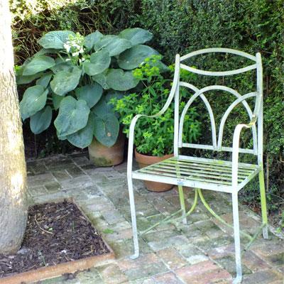 Hosta sieboldiana with chair