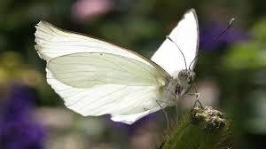 Ghenadi și fluturele cu cap de gumă