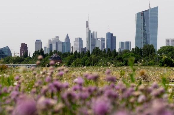 2014-05-23 EM1 Frankfurt 0090