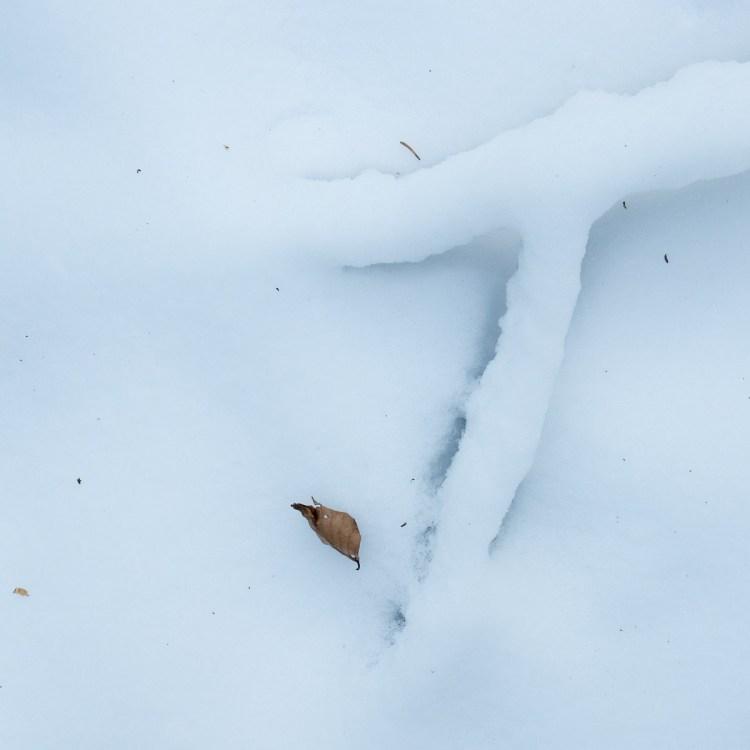 Winter - Fotografie