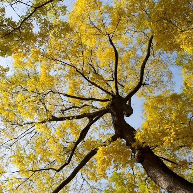2011-11-06 X100 Frankfurt Herbstlaub 010