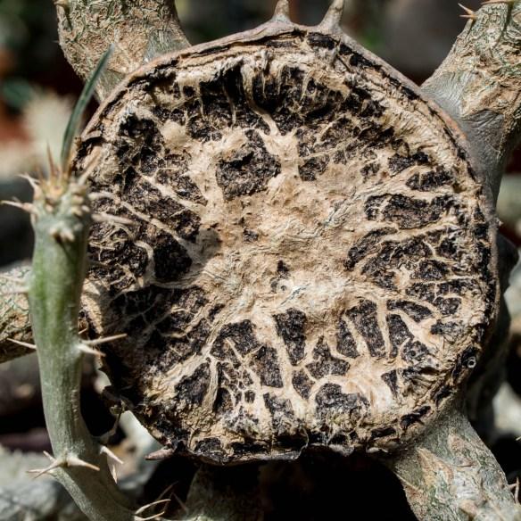 Palmengarten Makroaufnahmen