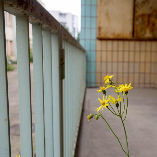 Lost Places Frankfurt Druckerei