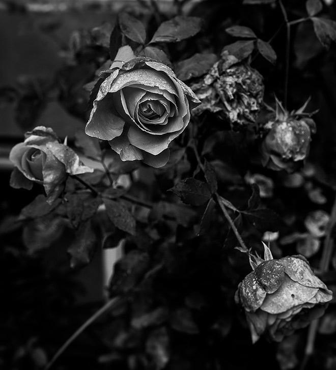 doafamily-garden-waste