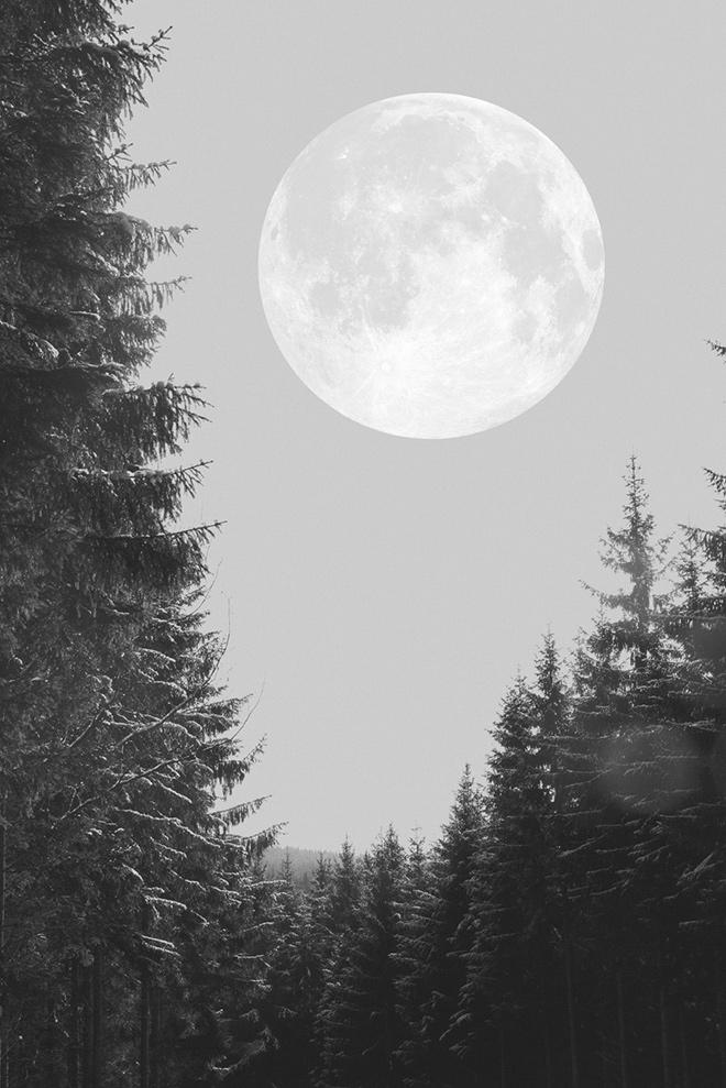dosfamily.moon