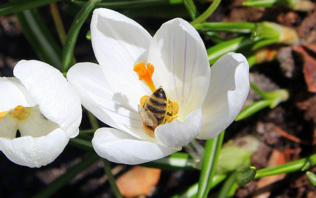 Spring Detox—REST And REPAIR DIET