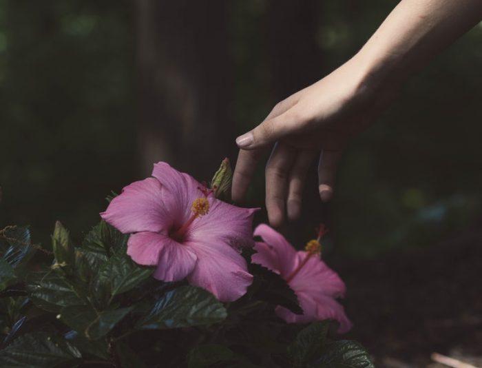 Head Over Hibiscus Ingredient Spotlight