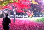 জাপান: পৃথিবীর সবচেয়ে বিনয়ী মানুষের দেশ