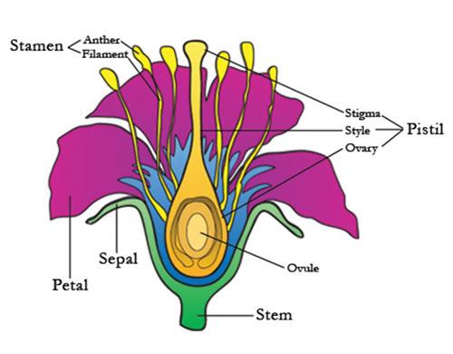 ce este o floare, schita