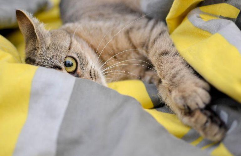 Воспитание домашних кошек