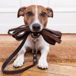 Как научить собаку не сложным командам