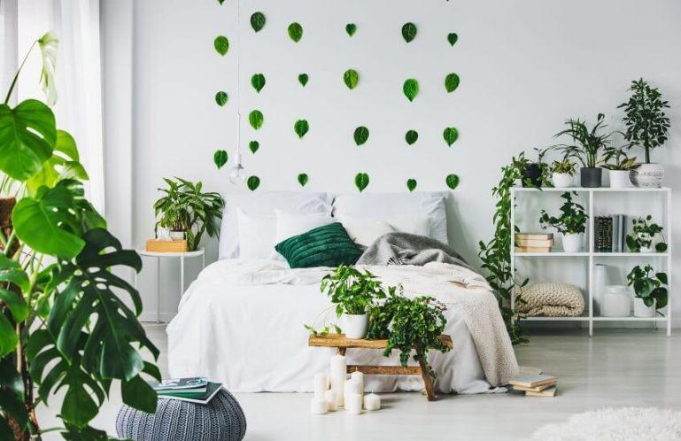 Лучшие растения для спальни