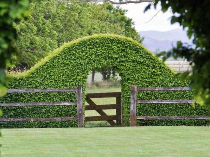 Главные задачи и принципы вертикального озеленения