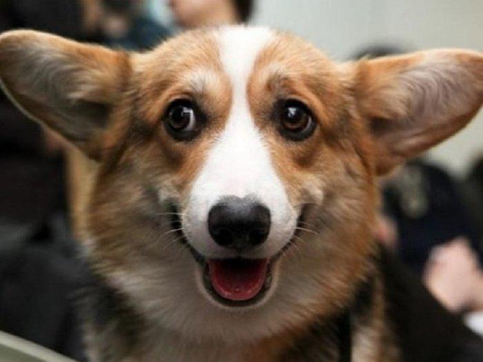 Если пес лизнул тебе ногу или руку, это особый знак