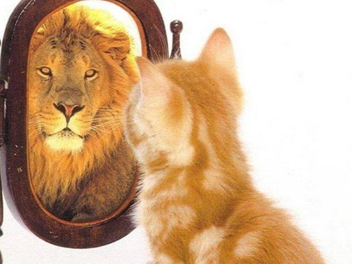 Уверенность в себе не должна быть громкой