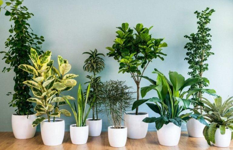 Уход за растениями во время отпуска