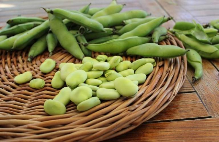 Как правильно выращивать овощные бобы?