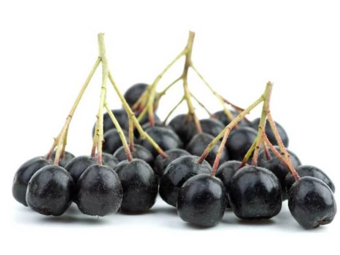 В чем польза черноплодной рябины