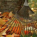 Успеть до зимы. Важные дела на даче осенью