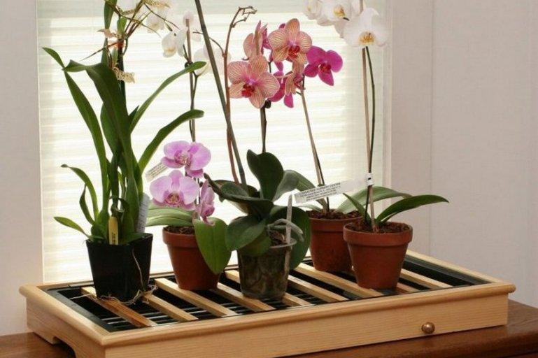В какой горшок поместить орхидеи