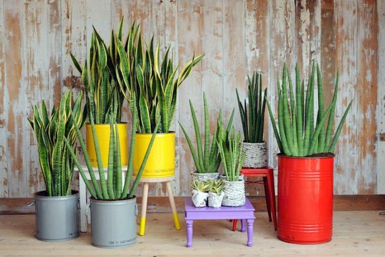 Эти 10 растений обеспечат твой дом чистым кислородом