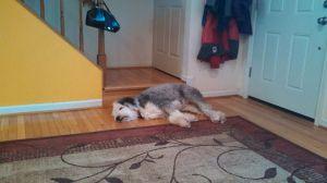 sleeping peekabu