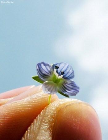 holdingflower3