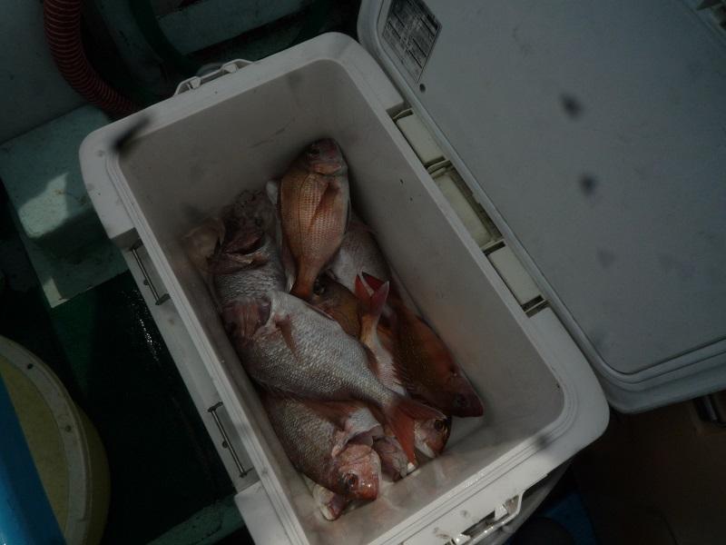 乗っ込みの真鯛釣り