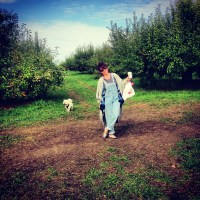 Apple Picking in Warwick with Dogs