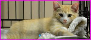 Jersey Shore Pops cat
