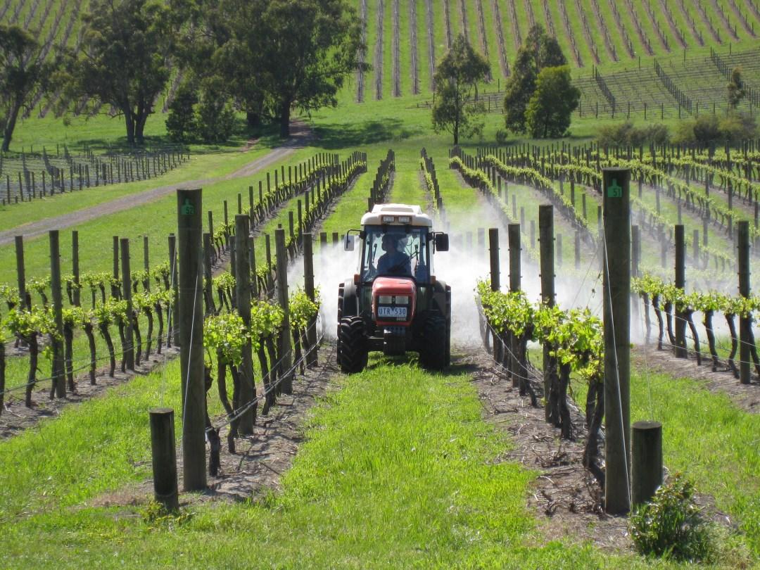 Killara Estate Winery Vines being sprayed