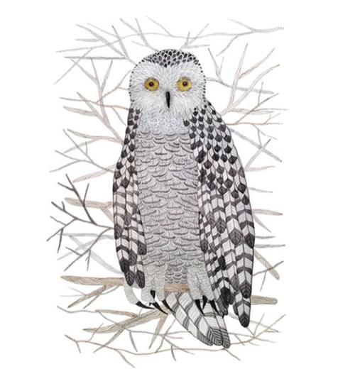 Birds snowy owl by Holly Ward Bimba