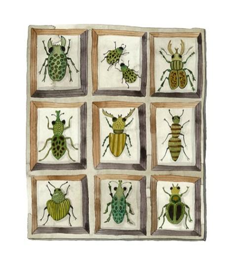 beetle sweevils by Holly Ward Bimba