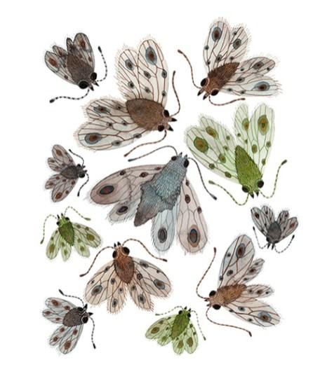 swarm empresses by Holly Ward Bimba
