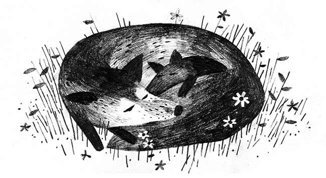 Fox Illustration Jon Klassen