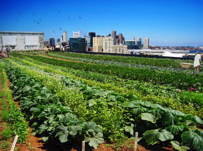 The Southie Farm…